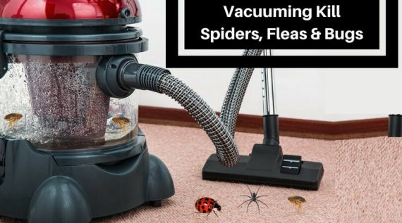 Does Vacuuming Kill Spiders, Fleas and Bugs