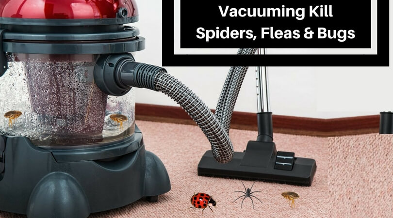 Does Vacuuming Kill Spiders Fleas And Bugs What S The
